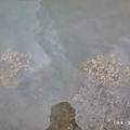 台東富山護漁區P1550023_調整大小1.JPG