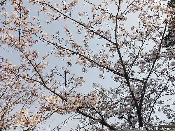日本九州西公園NishikoenP1500982_調整大小1.JPG
