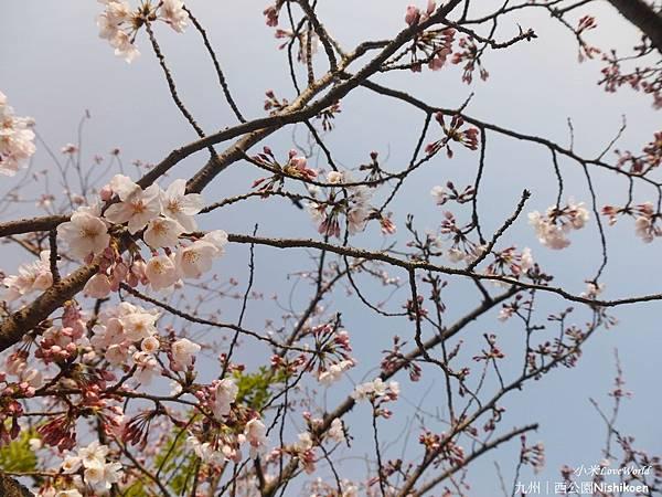 日本九州西公園NishikoenP1500985_調整大小1.JPG