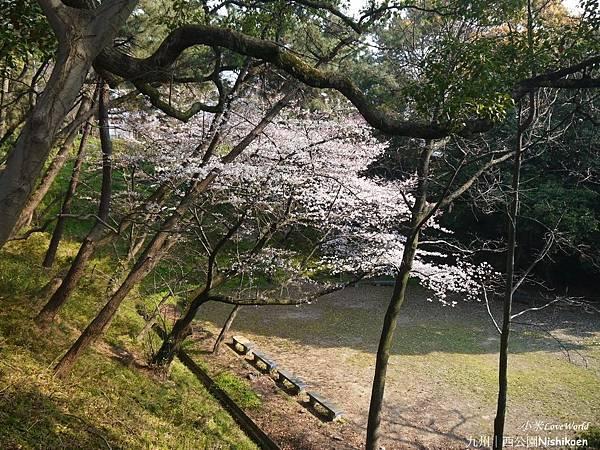 日本九州西公園NishikoenP1510012_調整大小1.JPG
