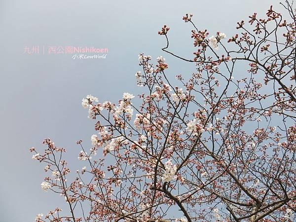 日本九州西公園NishikoenP1510024_調整大小1.JPG