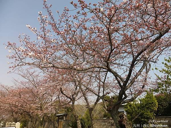 日本九州西公園NishikoenP1510027_調整大小1.JPG