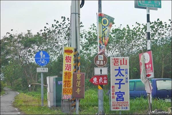 花蓮樹湖櫻花P1660618_調整大小1.JPG