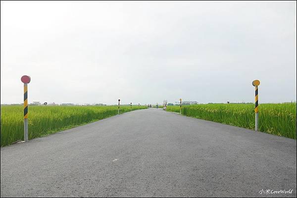 宜蘭冬山伯朗大道P1750225_調整大小1.JPG