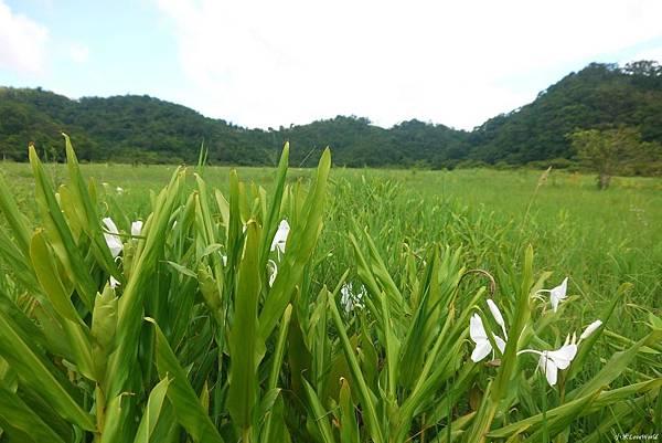 東源森林遊樂區與東源水上草原P1770263_調整大小1.JPG