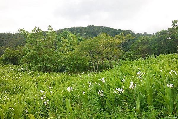東源森林遊樂區與東源水上草原P1770346_調整大小1.JPG
