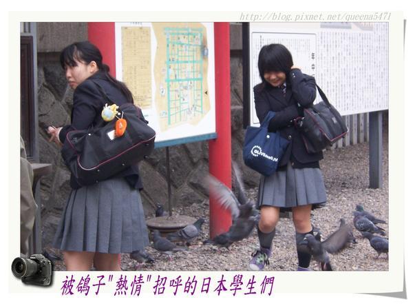 鴿子VS日本妹.jpg