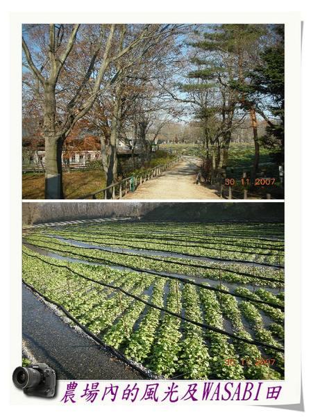 農場內的風光及WASABI田.jpg