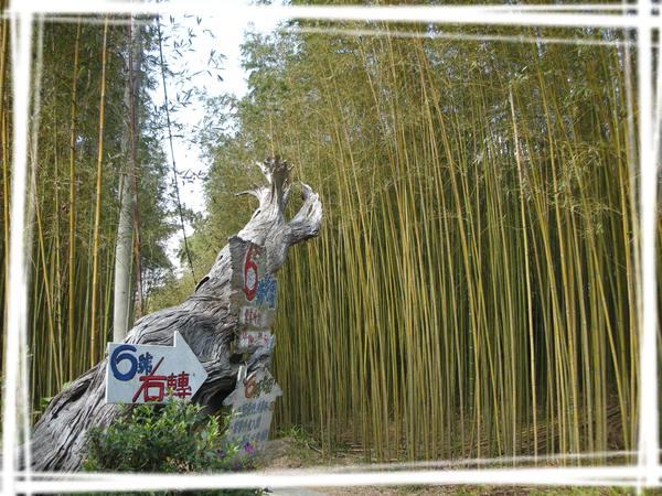 2008.1.5 新竹6號花園.jpg