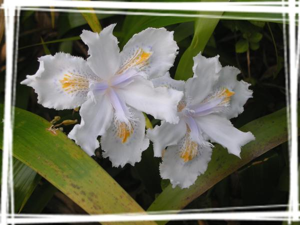 2008.1.5 新竹6號花園4.jpg