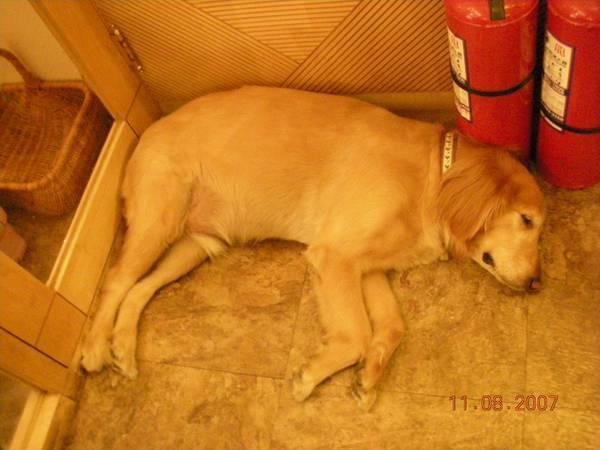 連狗都睡的很誇張