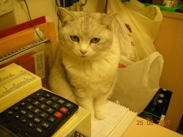 聽說這隻貓有公主命~不好惹的!