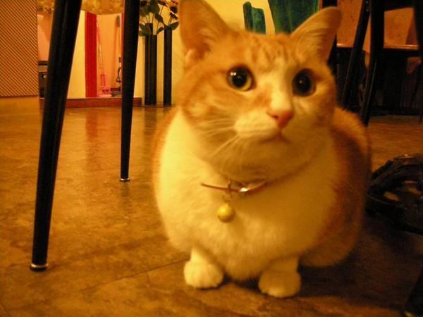 大眼橘貓~我最愛了!