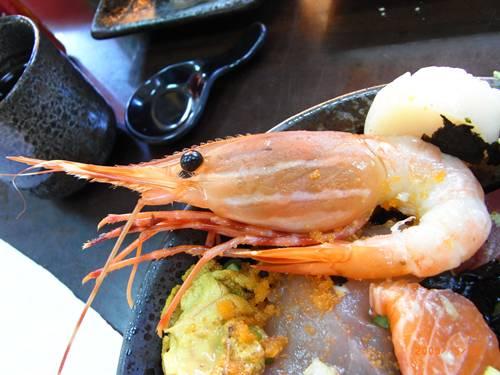 一隻要價100元的牡丹蝦.JPG