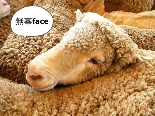 綿羊秀 (1).JPG