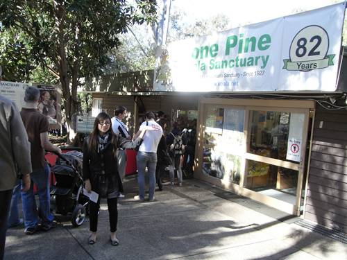 lone pine koala sancturay.JPG