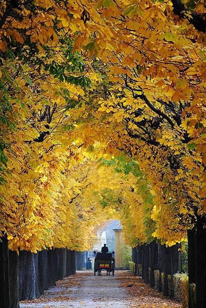 維也納-秋天