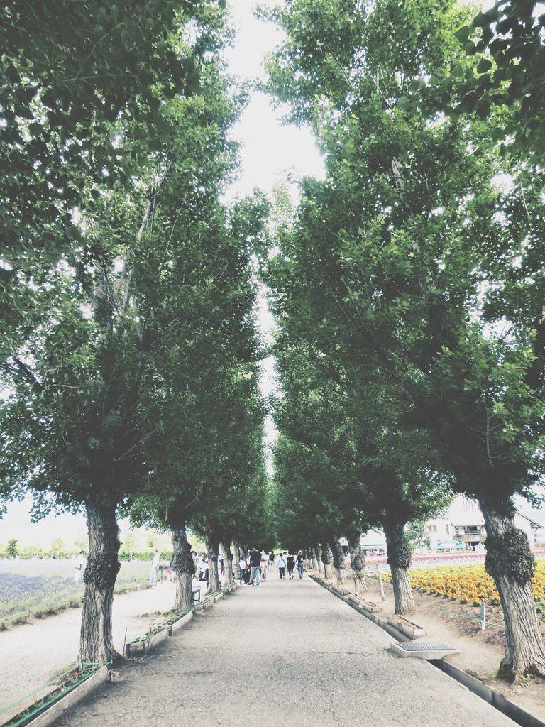 北海道_7445.jpg