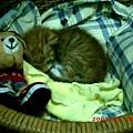 1M妮妮2--熟睡中的妮妮,妳現在好嗎?媽咪好想妳唷!