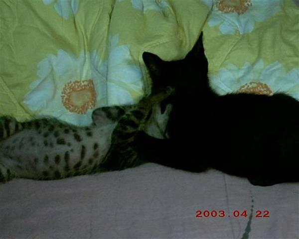 2M魯魯與蕾蕾玩耍1--兩人都是兩個月大