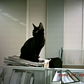 4M魯魯1---4個月的魯魯,身型有點長也