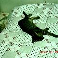5M的蕾蕾愛睡覺2