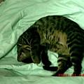 5M的蕾蕾愛睡覺3