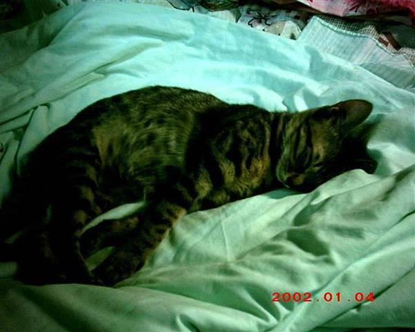 5M的蕾蕾愛睡覺6