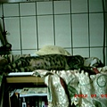 5M的蕾蕾愛睡覺8--蕾蕾,睡相太差了唷!