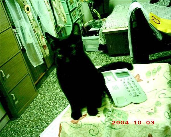 6M的魯魯3--看到蕾蕾睡覺,魯魯也想睡了