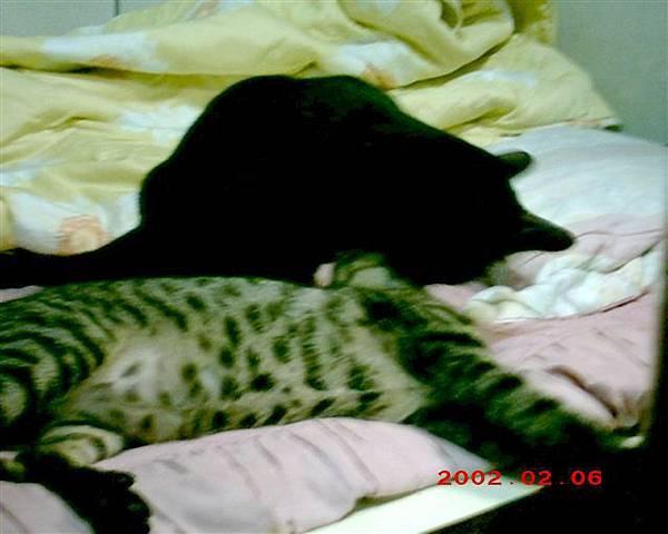 6M的魯魯4--敵不過睡魔的招喚,魯魯與7M的蕾蕾就醫起呼呼大睡了!