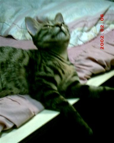 7M的蕾蕾2--開始想睡覺了