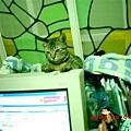 7M的蕾蕾8--蕾蕾開始在電腦上,尋找好位置睡覺