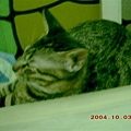 7M的蕾蕾9--果然,蕾蕾又躺在電腦上睡覺了(寶貝,妳怎都不怕輻射線有害呢?!)
