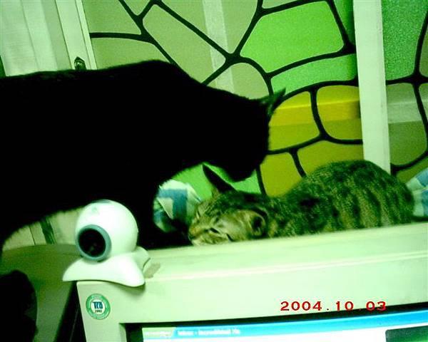 7M的蕾蕾10--魯魯,姐姐在睡覺,你要做什麼?