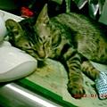 7M的蕾蕾14--熟睡中的蕾蕾,其實很美
