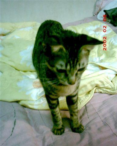 7M的蕾蕾18--寶貝,媽咪要妳健康、平安、又喜樂