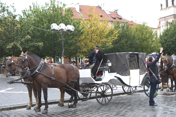 舊城廣場邊的遊城馬車