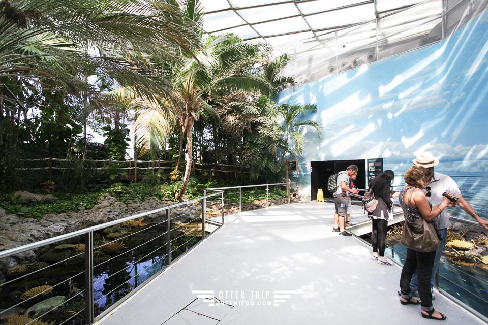 葡萄牙里斯本親子景點/歐洲最大室內海洋館-里斯本海洋水族館Oceanário de Lisboa見萌物海獺