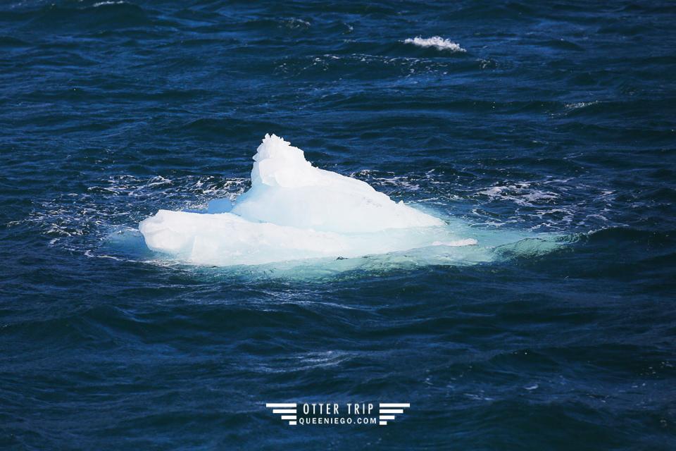 美國阿拉斯加Seward景點 Major Marine Tours出海觀鯨看冰川