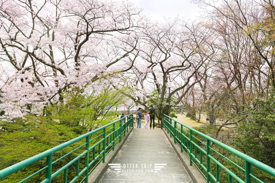 能登半島 七尾賞櫻景點-小丸山城址公園 這裡不用人擠人看櫻花
