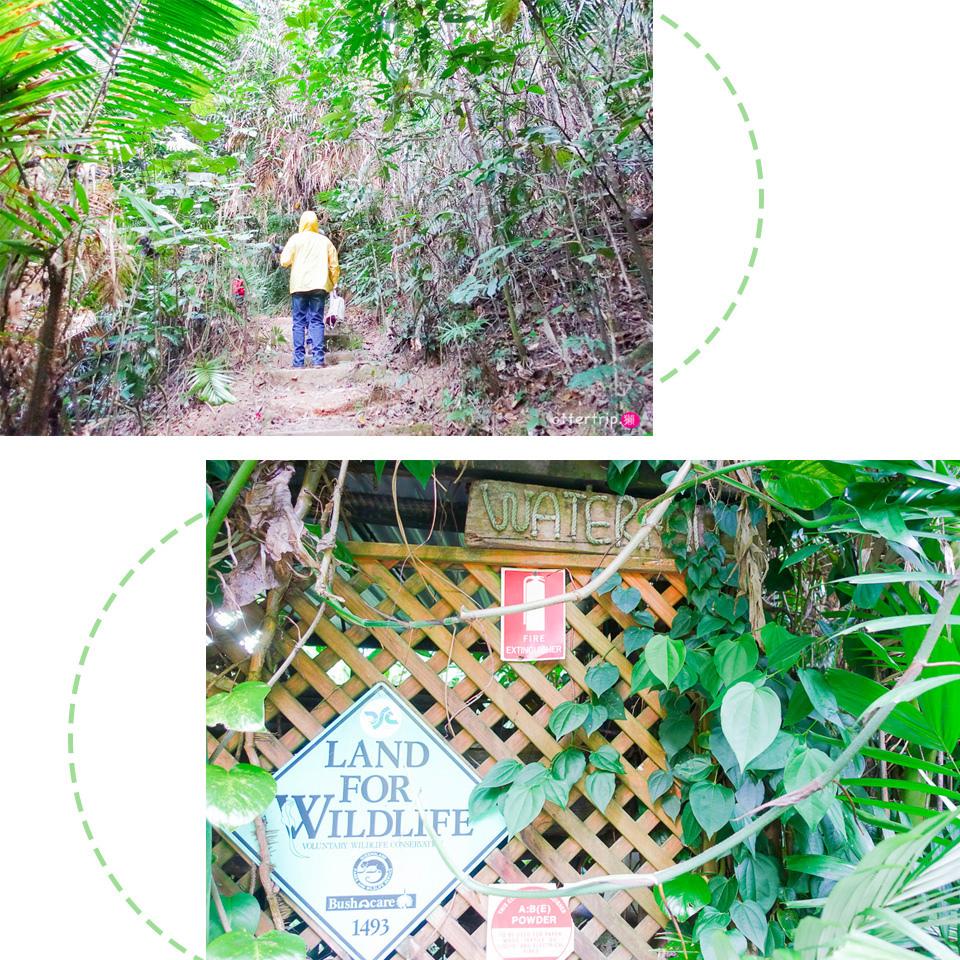 澳洲Daintree住宿推薦 Daintree Eco Lodge 擁有熱帶雨林和潟湖的生態旅館