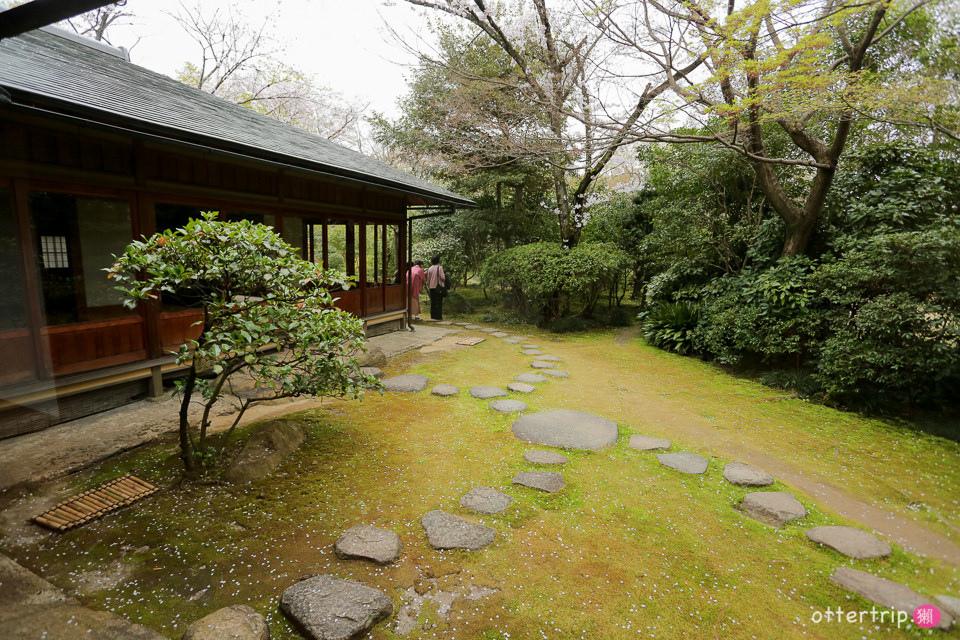日本犬山賞櫻名所  犬山城,有樂苑裡的國寶茶室-如庵