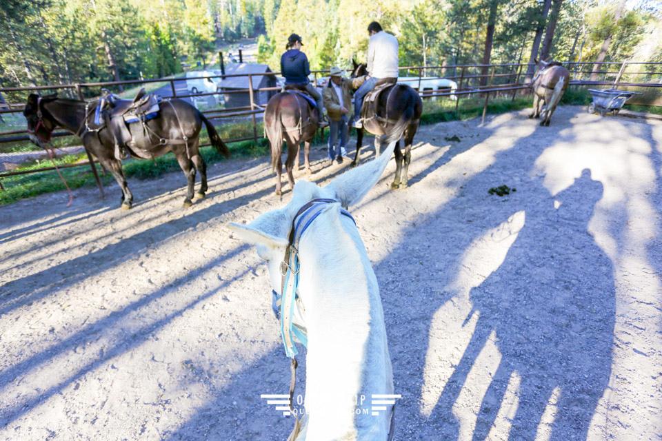 美國大峽谷北緣景點 騎騾遊大峽谷北緣Grand Canyon Mule Rides North Rim