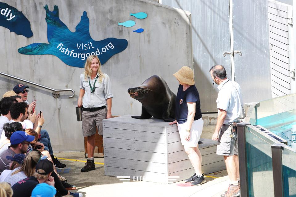 澳洲雪梨親子景點 塔龍加動物園Taronga Zoo和無尾熊拍照
