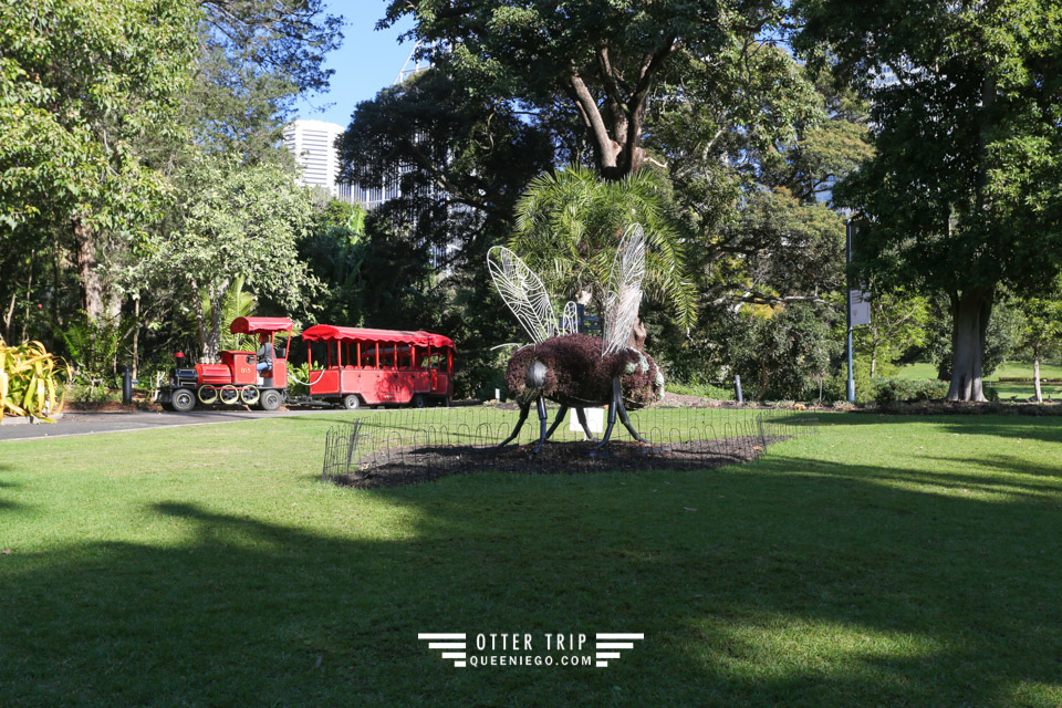 澳洲雪梨景點 雪梨皇家植物園的The Botanic Gardens Café吃個午餐