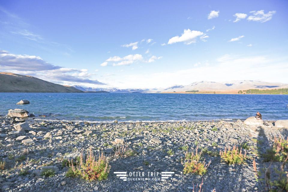 紐西蘭南島自駕游 Lake Tekapo提卡波湖畔的牧羊人教堂觀星及Kohan湖畔餐廳吃鮭魚壽司