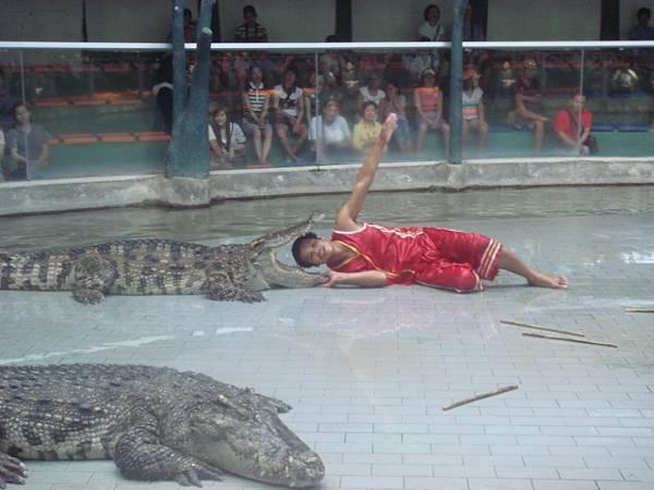 鼎鼎大名的鱷魚表演
