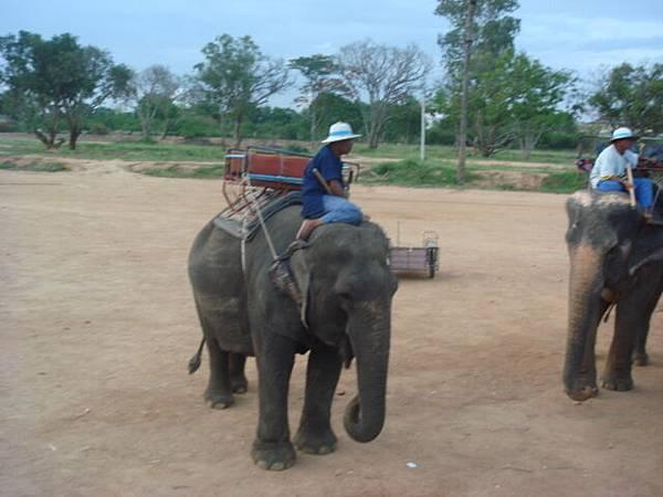 又一著名觀光行程-騎大象