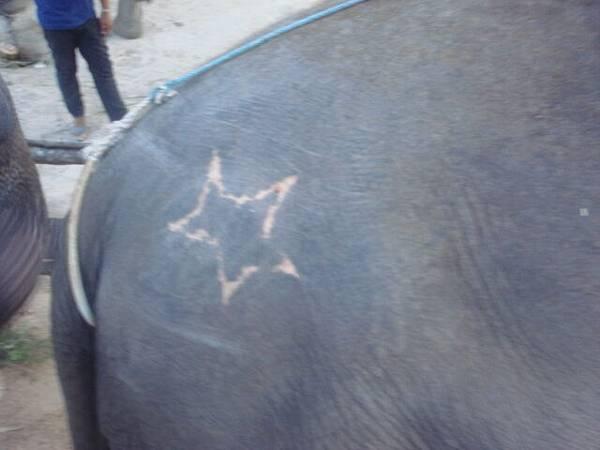 這隻大象有刺青耶